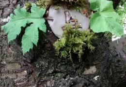 tree_clay_01.jpg