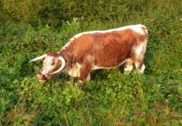 conservation_and_management_of_grassland_02.png