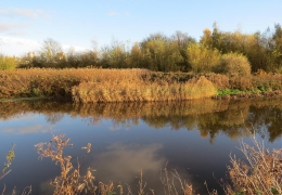 project_wetland_habitat_improvement_01.jpg