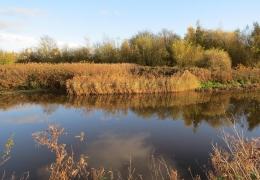 project_wetland_habitat_improvement_01.jpg